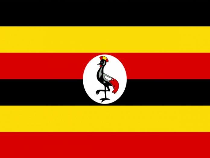 Uganda gold