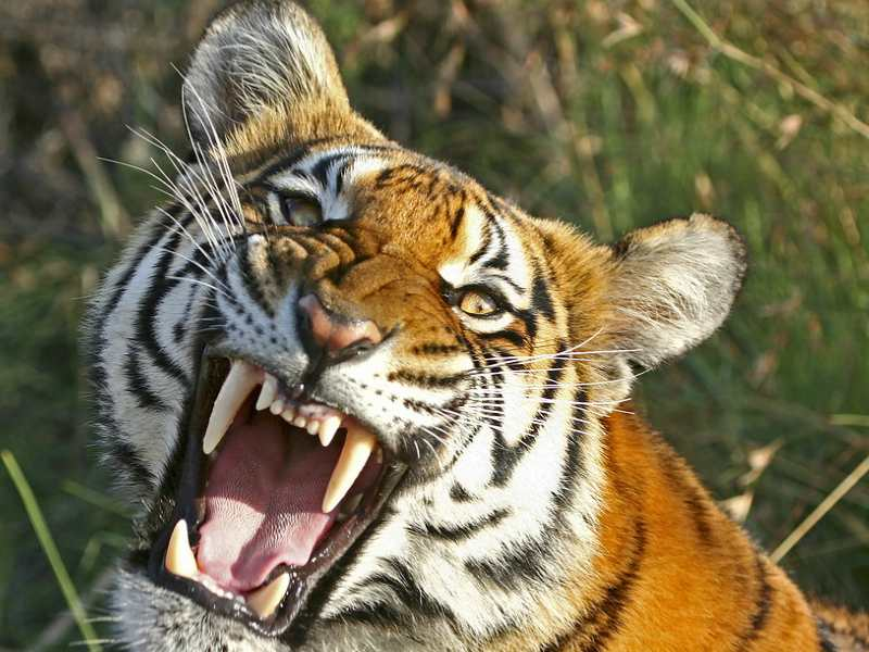 AMC fights to save endangered species from extinction